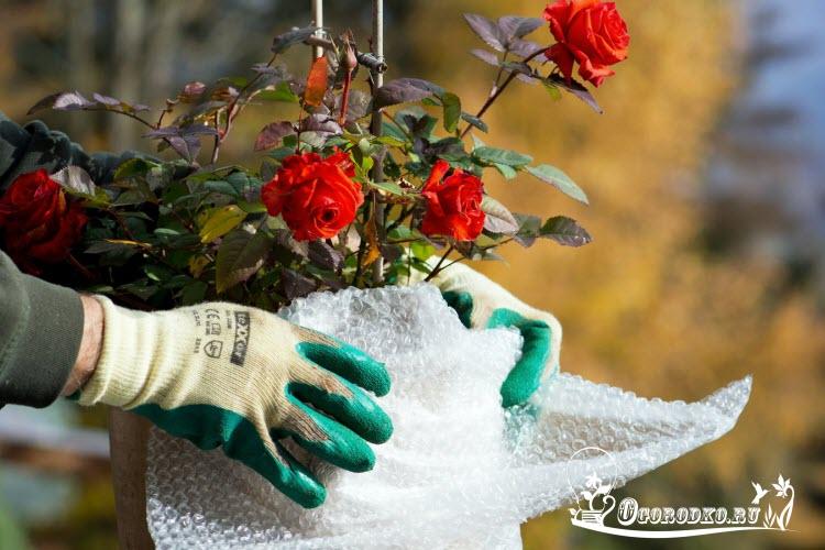 как укрыть розы на зиму - совет и секреты, выбор материала