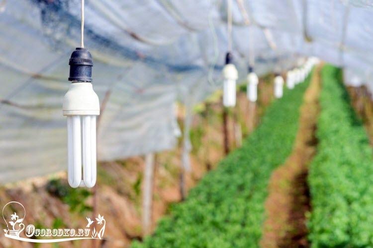 Лампы для выращивания рассады - как выбрать, критерии, какой свет должен быть