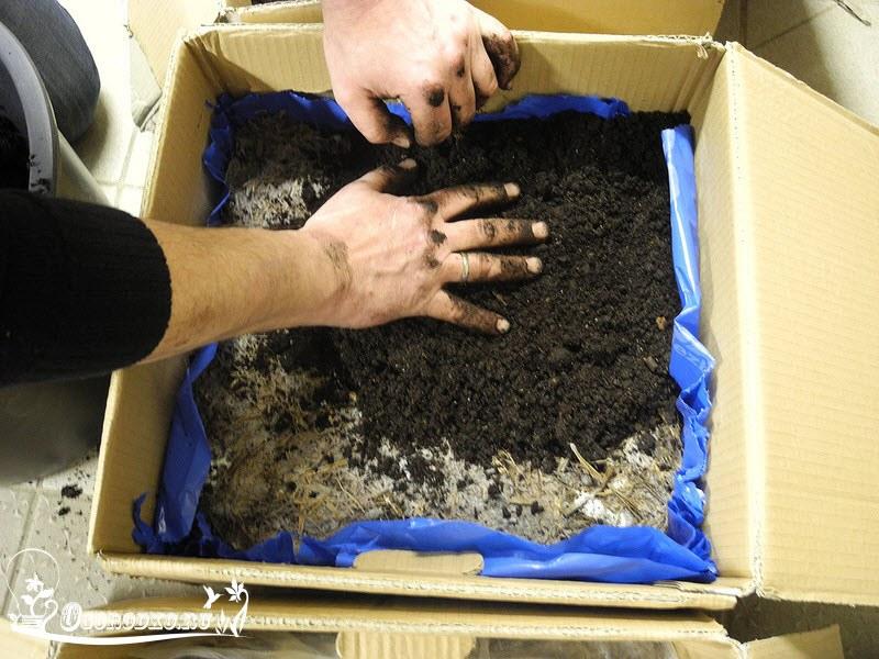 шампиньоны выращивание в домашних условиях