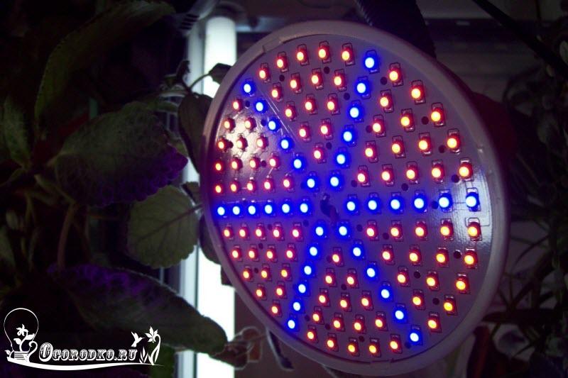 светодиодные лампы для подсветки рассады