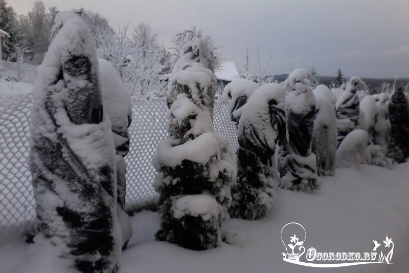 утепление туи на зиму
