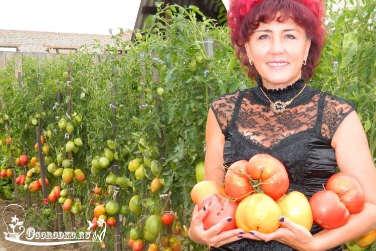 как вырастить рассаду помидор, опыт Натальи Щербининой из Минусинска