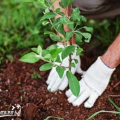 посадка плодовых деревьев, советы и рекомендации специалистов