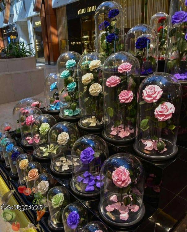 где купить розу в колбе
