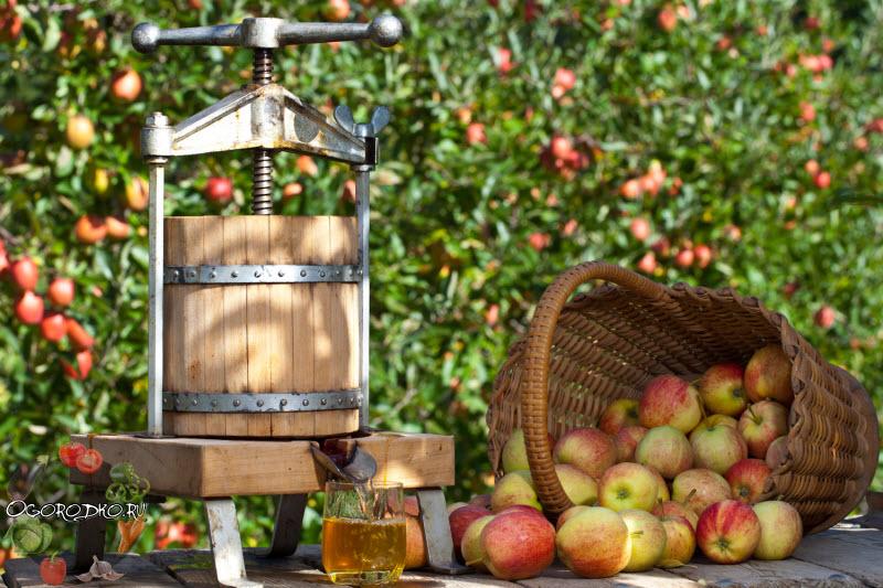 лучшие заготовки из яблок на зиму. Пастила, варенье, сок...