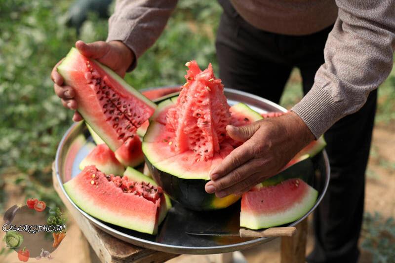 Арбуз это ягода или фрукт, подробно разберемся