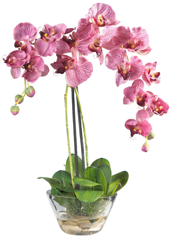 обожает картинки орхидей на ножке поисках пищи
