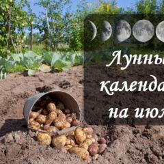 Лунный посевной календарь на июль