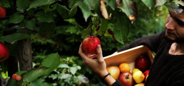 Как сохранить яблоки на зиму свежими в домашних условиях – раскроем секреты