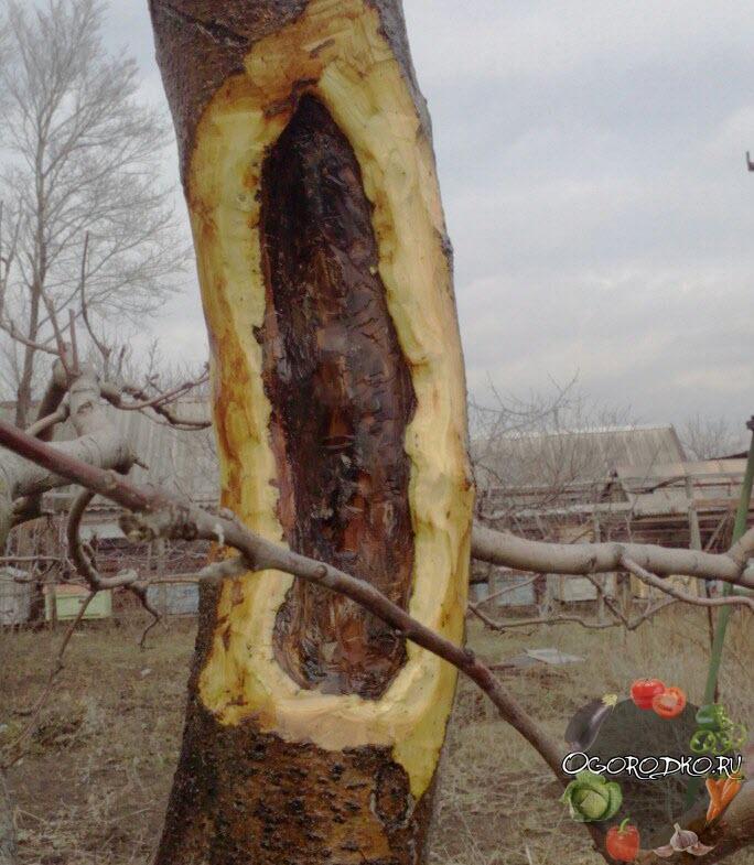 обработка деревьев медный купоросом