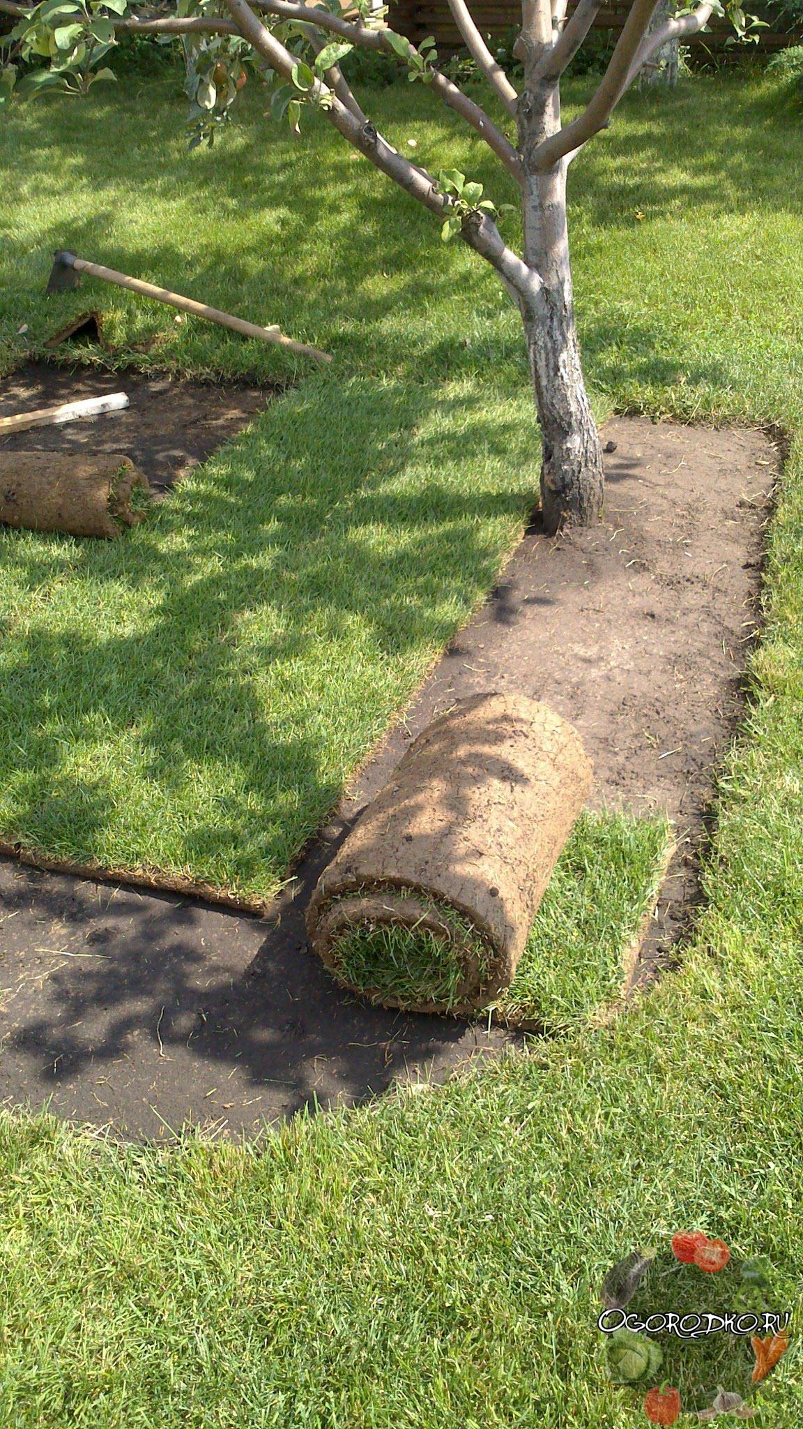 рулонный газончик
