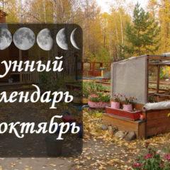 Лунный посевной календарь на октябрь