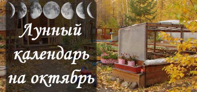 Лунный посевной календарь на октябрь 2018 года садовода и огородника