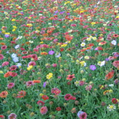 Мавританский газон - фото
