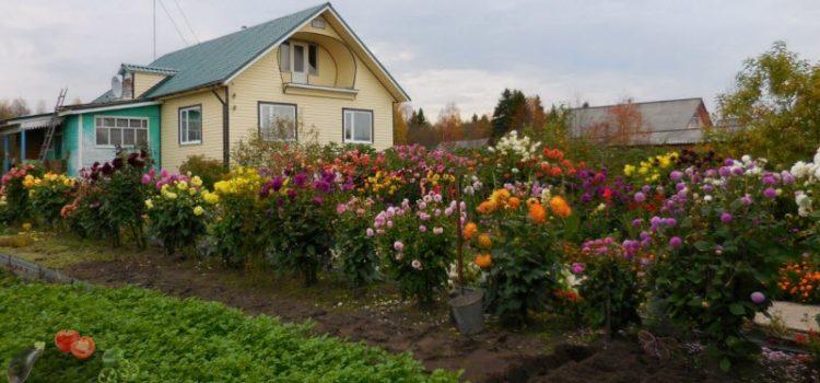 Осенние работы в саду и огороде для хорошего урожая и красивых цветов!
