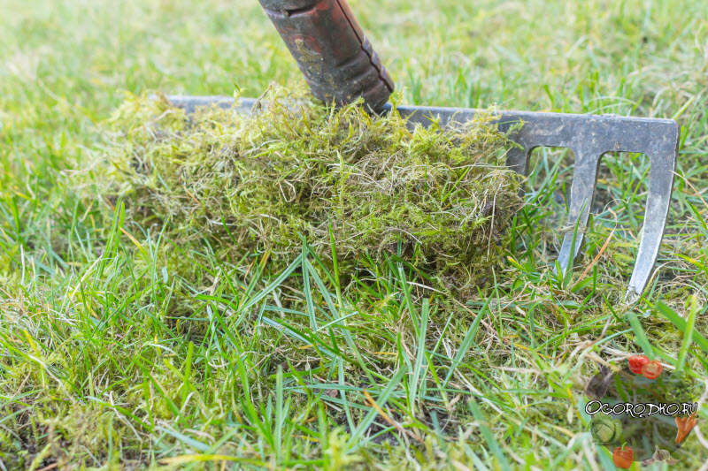 как удалить мох на газоне