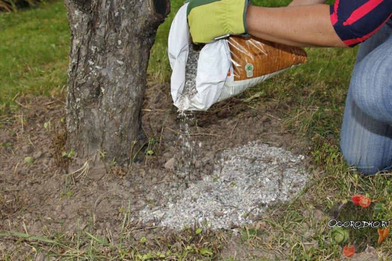 осеннее внесение удобрений под деревья