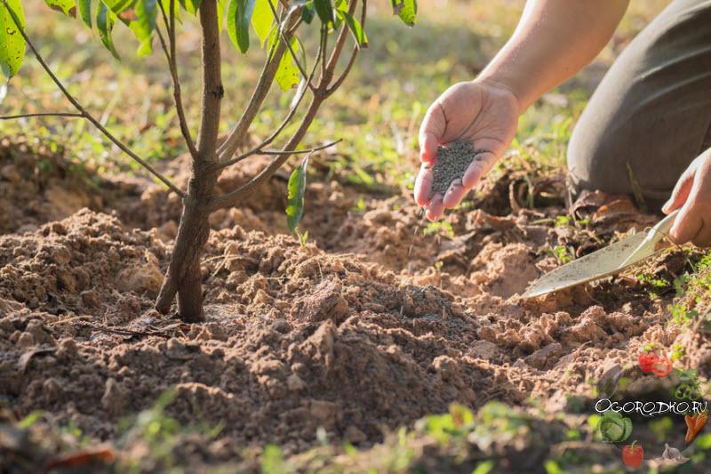 подкормка плодовых деревьев минеральными удобрениями