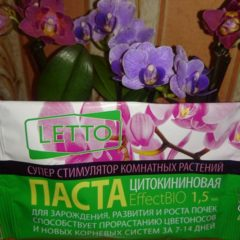 Чем подкормить орхидею