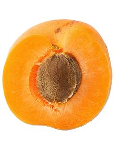 абрикос из косточки