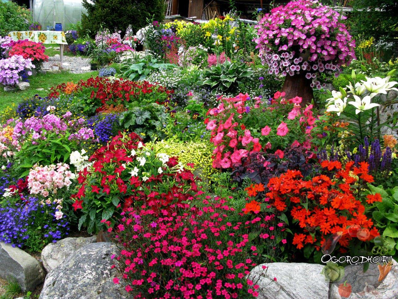 буйство цветов в саду