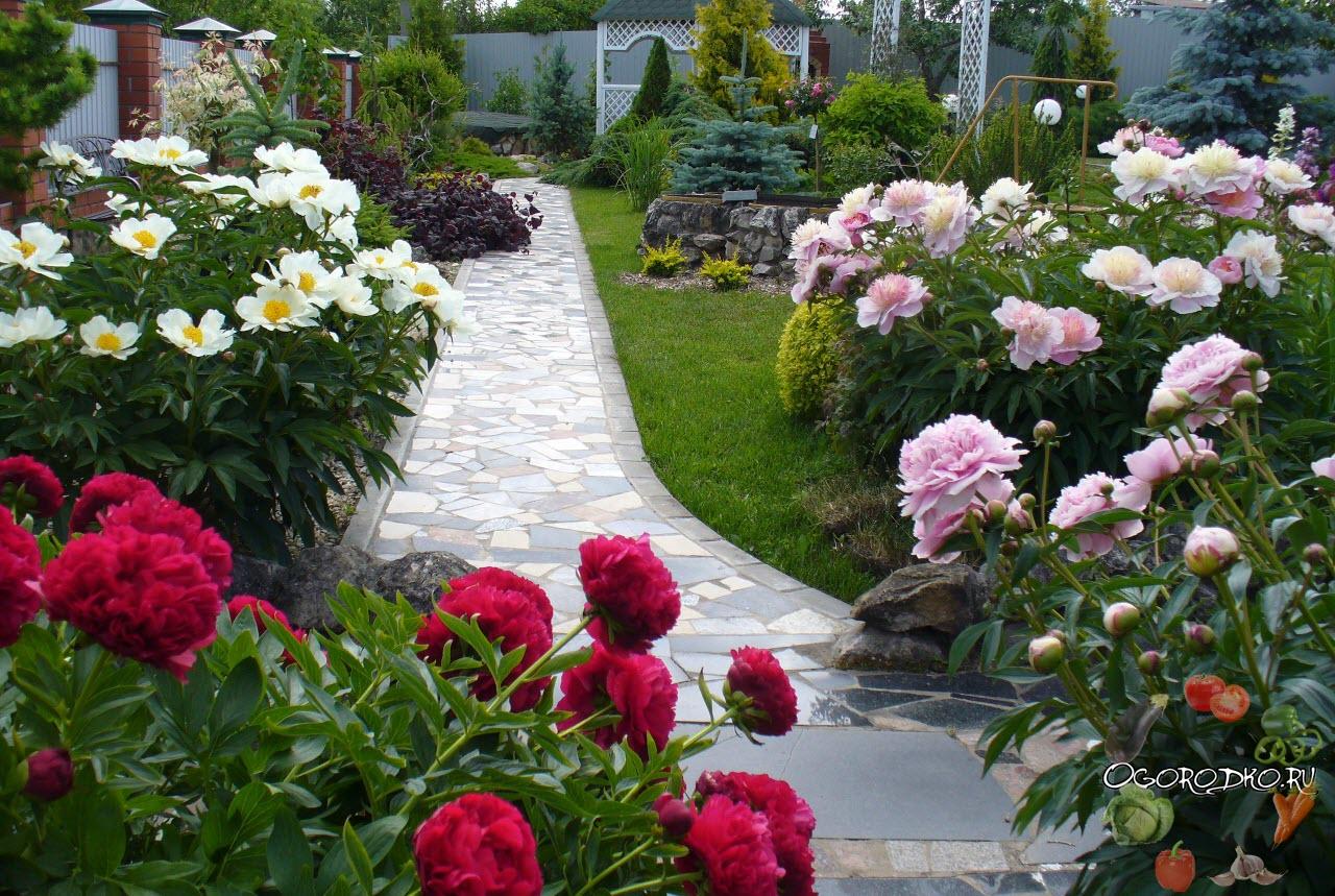 какие цветы использовать в ландшафтном дизайне