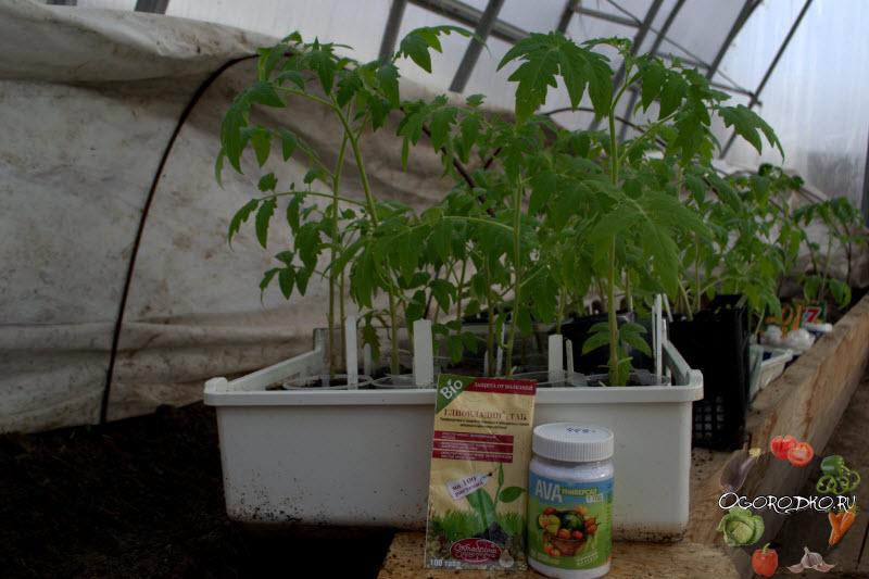 препараты для роста рассады помидор