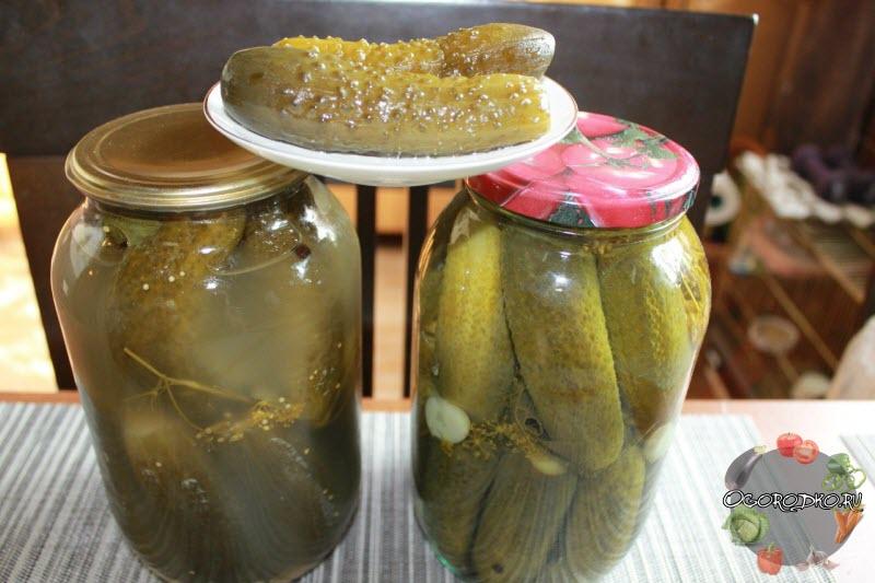 Соленные огурцы рецепты хрустящих огурчиков