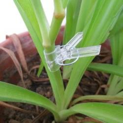 прищепки для прививки растений