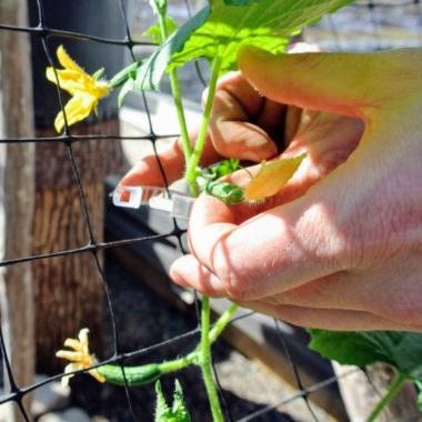 клипсы для крепления растений